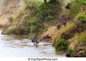 The great migration in full swing. Mara river, Africa