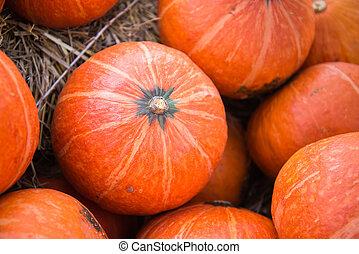 The great pumpkin orange, yellow and beautiful.