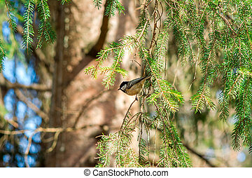 The great tit sits on a bare branch of a tree illuminated by sunlight and looks into the left in readiness to fly away