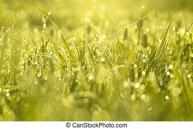 green blur background from a grass on a field - the green...