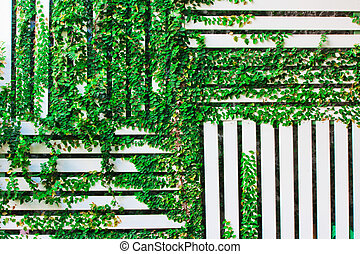 The Green Creeper Plant on a White Wall background