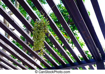 The Green Dave hung over the dark lath. - Green Dave hung...