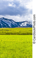 The green fields in front of snow mountains on Kamchatka peninsula