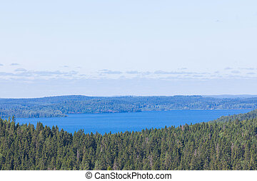 The green forest of fir, spruce an pine trees near the shore of the Ladoga in Russia lake in the sunny summer day