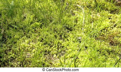 The green grasses on the spring