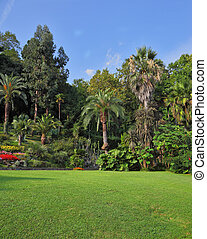 The green grassy lawn in an exotic park