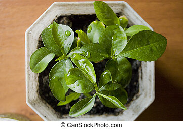 green house plant in a pot on a wooden table. top view