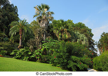 The green lawn in an exotic park