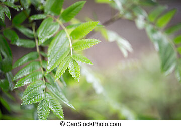 The green leaves on a branch