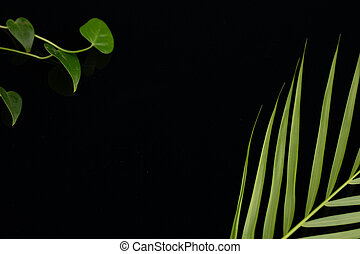 The green leaves on black background. Space for text