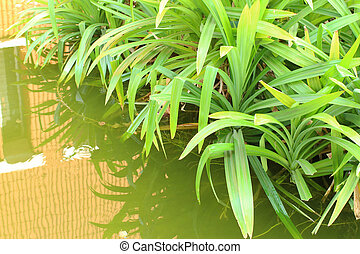 the green leaves on water