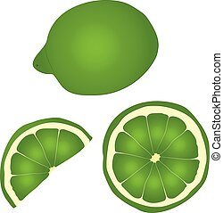 green lime whole and in section vector drawing illustration