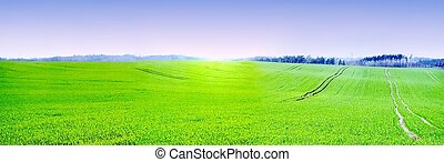 the green lowlands