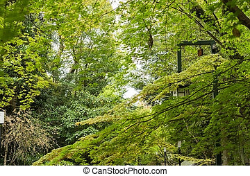 green maple trees and leaves