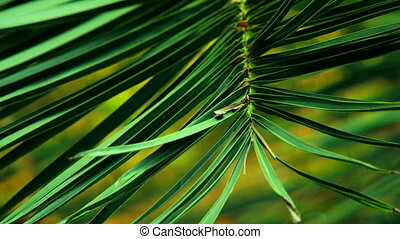 The green palm branches