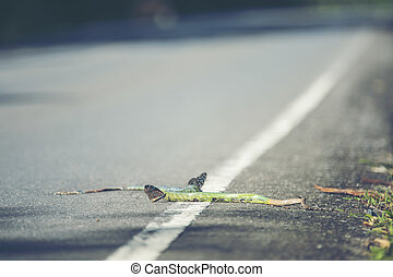 The green snake dead on the road in Khao Yai National Park, Thailand