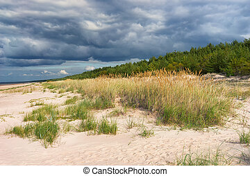 The green strip of wood on the sandy beach of the Baltic Sea