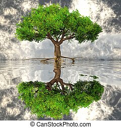 the green tree and the water