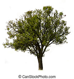 the green tree on a white background