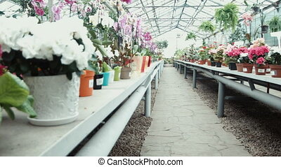 The greenhouse with flowers - The greenhouse shop with...