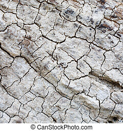 The grey cracked surface