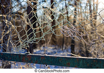 The grid of the fence covered with frost on a frosty morning, cold snap, beautiful background