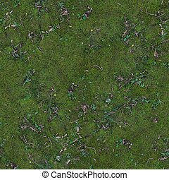 The ground is covered with green moss and small sticks .Texture or background