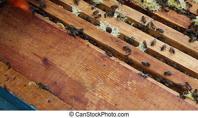 The Group of Bees in The Hive. Preparations Before Rocking Honey