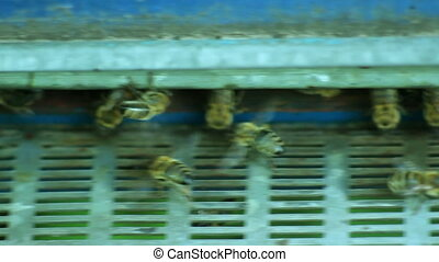 The Group of Bees in The Hive