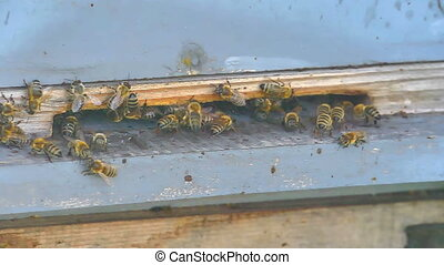 The Group Of Bees In The Hive slow motion