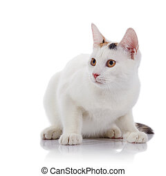 The guarded white cat with yellow eyes