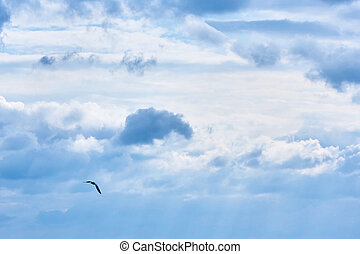 The gull in the sky.