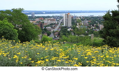 Hamilton, Canada, city center with flowers in foreground