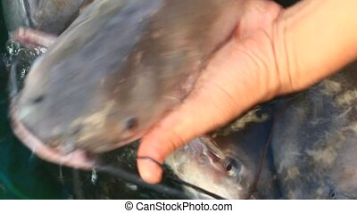 the hand catch fish