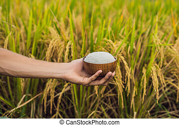The hand holds a cup of boiled rice in a wooden cup, against the background of a ripe rice field