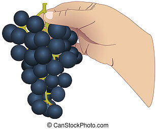 The hand with the bunch of grapes