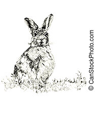 The Hare - Pen and ink hand drawn illustration of a hare...