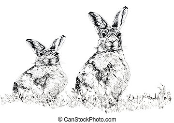 The Hares - Pen and ink hand drawn illustration of a female...
