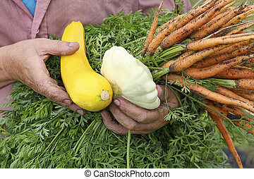 The harvest of vegetables.