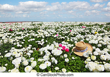 The hat on field of white flowers