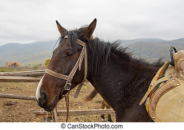 The head of a brown horse against the misty mountains.