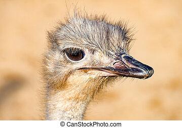 The head of a Emu Bird