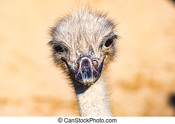 The head of a Emu Bird