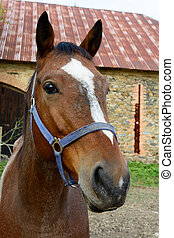 The head of a horse on a farm
