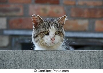 the head of a large old cat behind a gray fence
