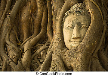 The Head of Buddha in Ayutthaya, Thailand.
