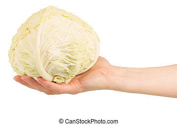 The head of cabbage in female hand isolated on white.