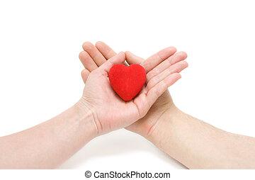 The Heart in hands.