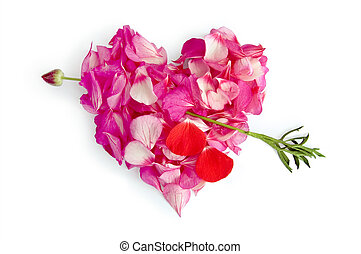 The heart of the pink petals of Pelargonium, rubbed through by an arrow from a red flower with drops of blood from the petals isolated on white background