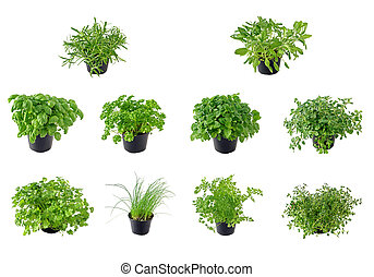 Different kinds of isolated herbs, from top left to right: Rosemary, Sage, Basil, Parsley, Lemon balm, Oregano, Coriander, Chive, Chervil and Thyme.